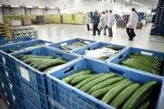 Spruitjestelers en komkommerkwekers kregen steun