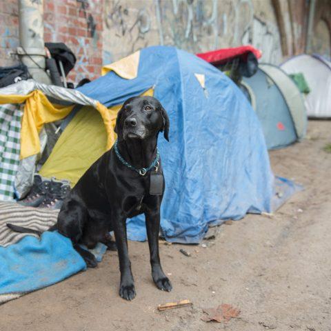 Jong en dakloos: in Berlijn drukt de oververhitte huizenmarkt jongeren de straat op