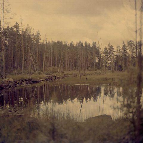 Fotodocument: De mysterieuze taal van de Zweedse bossen