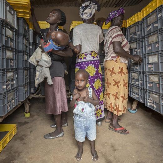 Ontwikkelingshulp komt vooral BV Nederland ten goede (en laat lokale boeren armer achter)