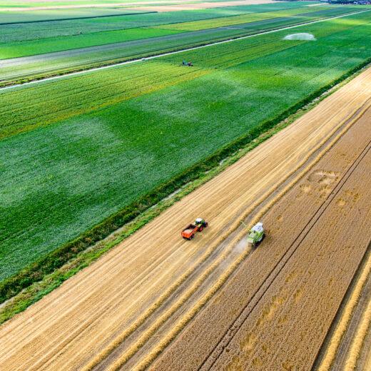 Dit kunnen we doen om de biodiversiteit in Nederland te herstellen