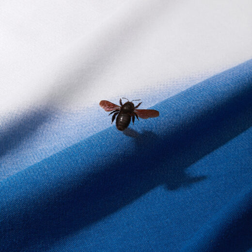 Hoe de insecten verdwenen (en we ze weer terugkrijgen)