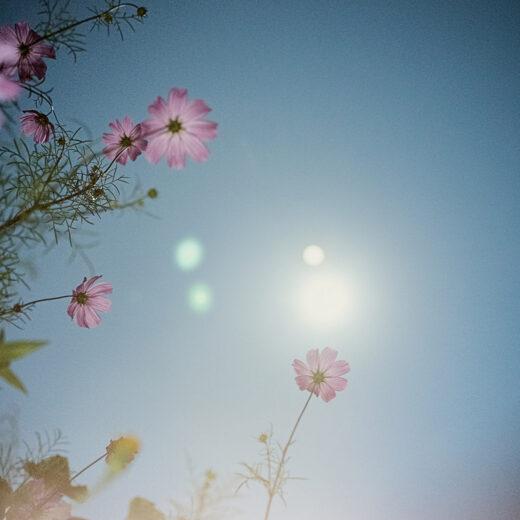 Fotodocument: Iedereen kijkt naar dezelfde zon