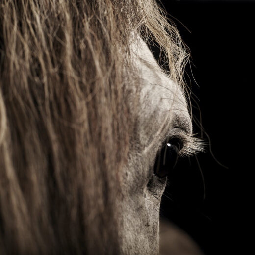 ADHD-therapie met behulp van paarden: niet bewezen, wel vergoed