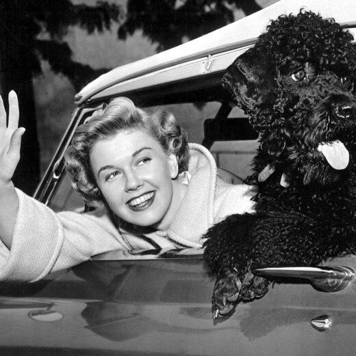 Doris Day (1922-2019): de diva met de vele honden