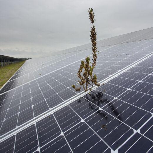 Hoe de energietransitie ten koste gaat van de biodiversiteit (en wat we daaraan kunnen doen)