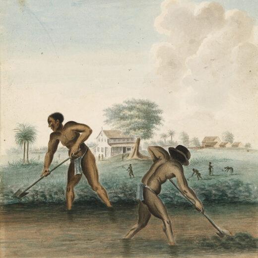 250 jaar slavernij in het Rijksmuseum: 'Met deze tentoonstelling slaan we voorgoed een andere weg in'